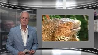 Regionieuws TV Suriname 23 aug  2021 – Geen vergunningen Guyanese Vissers – Parkeerwachters legaal?