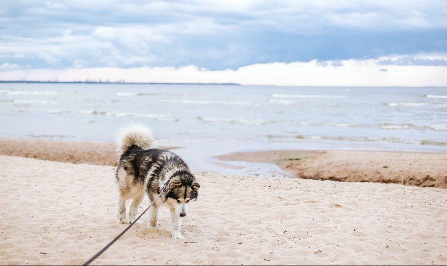 Wassenaar – Hond op strand bij Wasenaarse Slag weer toegestaan